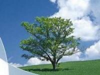 arii-verzi-protejate