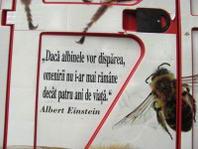 citat Einstein la Plai