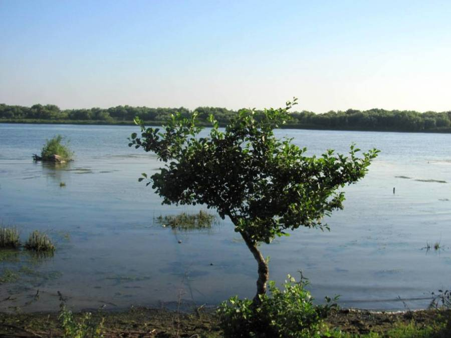 copacul din delta