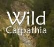 wild Carphatia