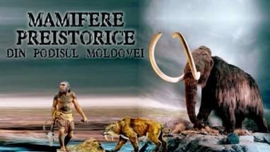 promo WEB mamifere 2013