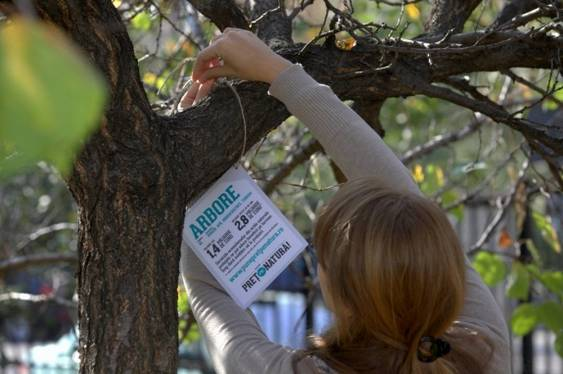 Etichetare arbori
