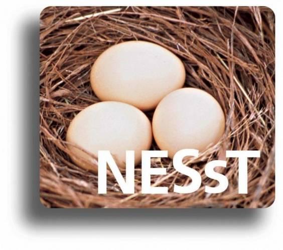 NESsT Logo