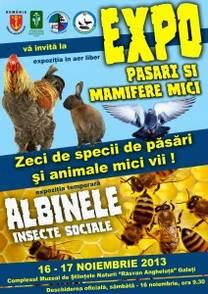 poster expo albine pasari animale 2013