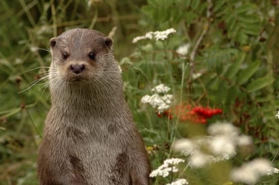 Otter.Nicole Duplaix