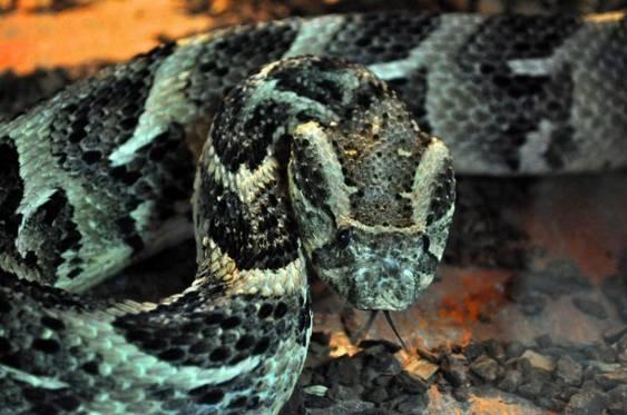 reptile 1