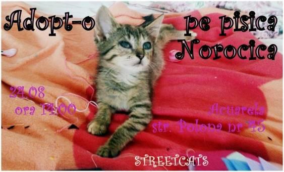 Streetcats Agust 2014