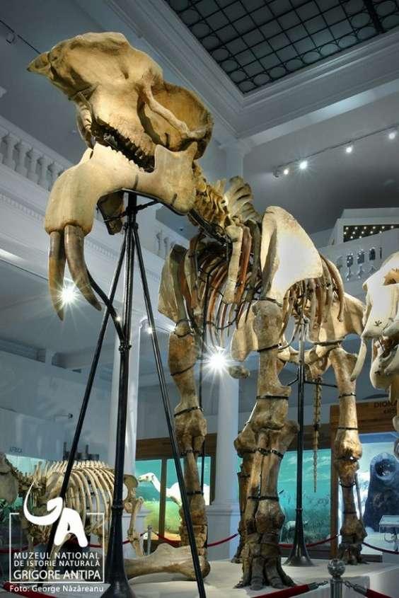 Exponat_Muzeul Grigore Antipa