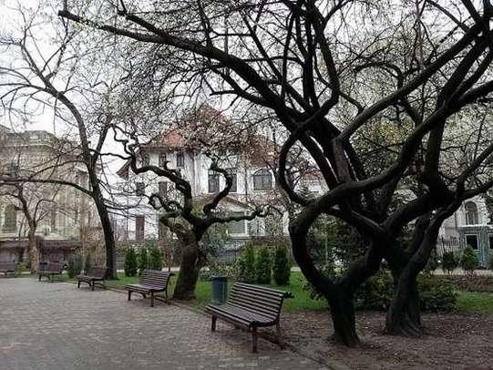 copaci infloriti romaniapozitiva