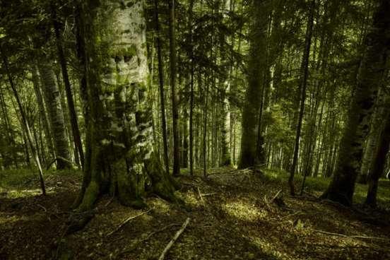 Credit foto2-Mitja Kobal-Greenpeace