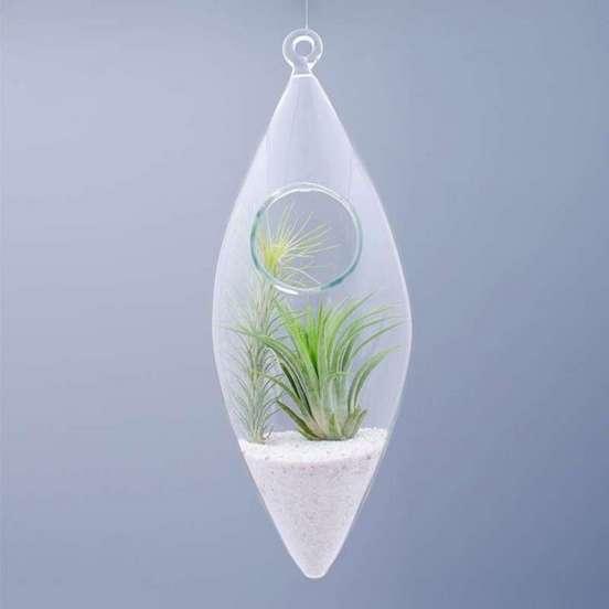 Targ Dizainar_plante Aerium