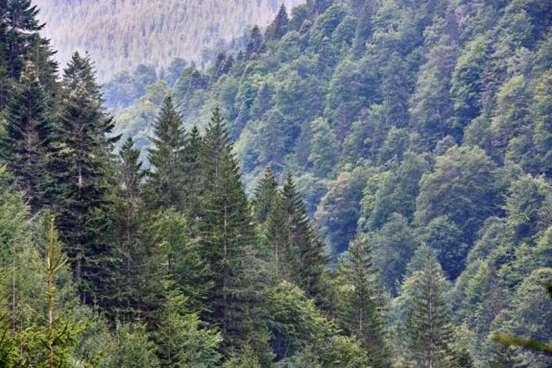 Waldlandschaft in der Nähe des Ortes Buda auf der Passstraße Transfagarasan.