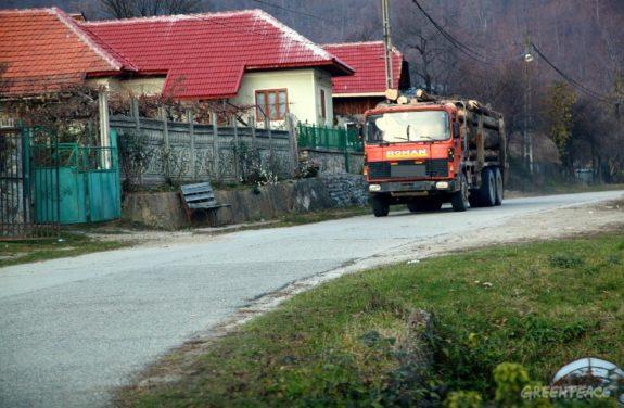 transport-ilegal-lemn-greenpeace