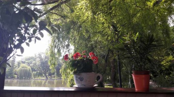 buna dimineata romaniapozitiva cismigiu 2017 poza 2